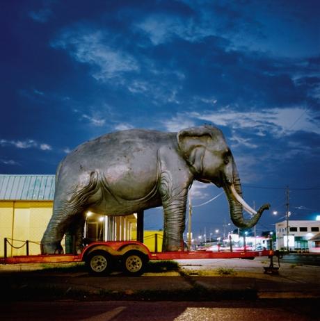 nungessar-elephant