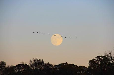 'Moon with Geese' Joie Iacono, New York, 2012