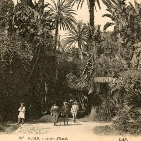 Alger - Jardin d'Essai